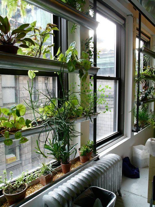 Money Plant Ideas Balcony