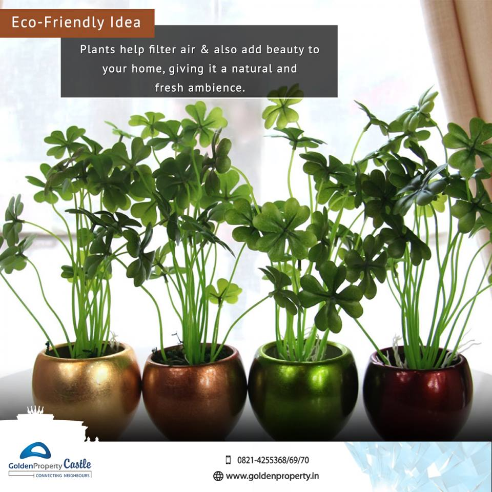55 Easy To Maintain Beautiful Variety Of Indoor Plants To Deck Up ...