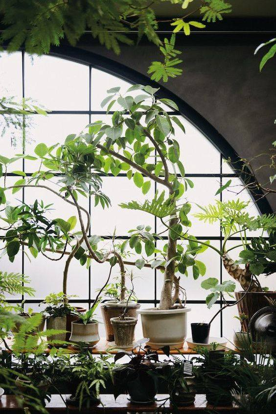 Indoor-Plants-In-Living Palm House Plant Fig Leaf on orange house plant, rosemary house plant, magnolia house plant, patchouli house plant, cypress house plant, cinnamon house plant, coconut house plant, vetiver house plant, lily house plant, basil house plant, almond house plant, ficus house plant, vanilla house plant, strawberry house plant, lavender house plant, mandarin house plant, rose house plant, lemon house plant, sage house plant, flower house plant,