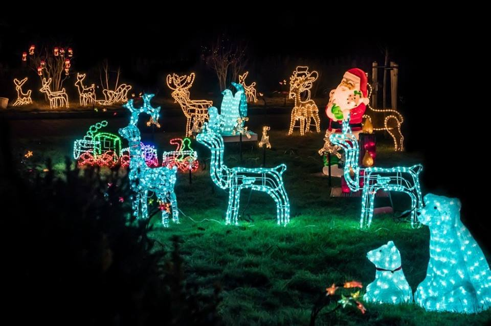 Beautiful Garden Decor On This Christmas With LED