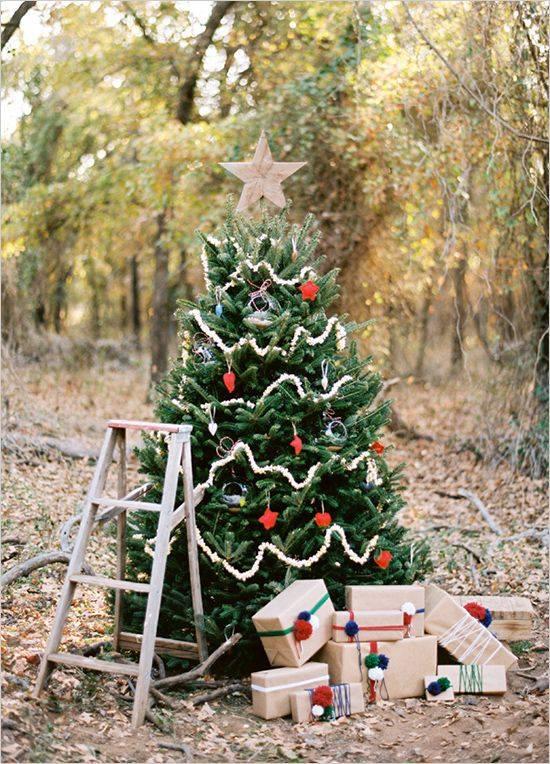 Elegant Christmas Tree In Backyard