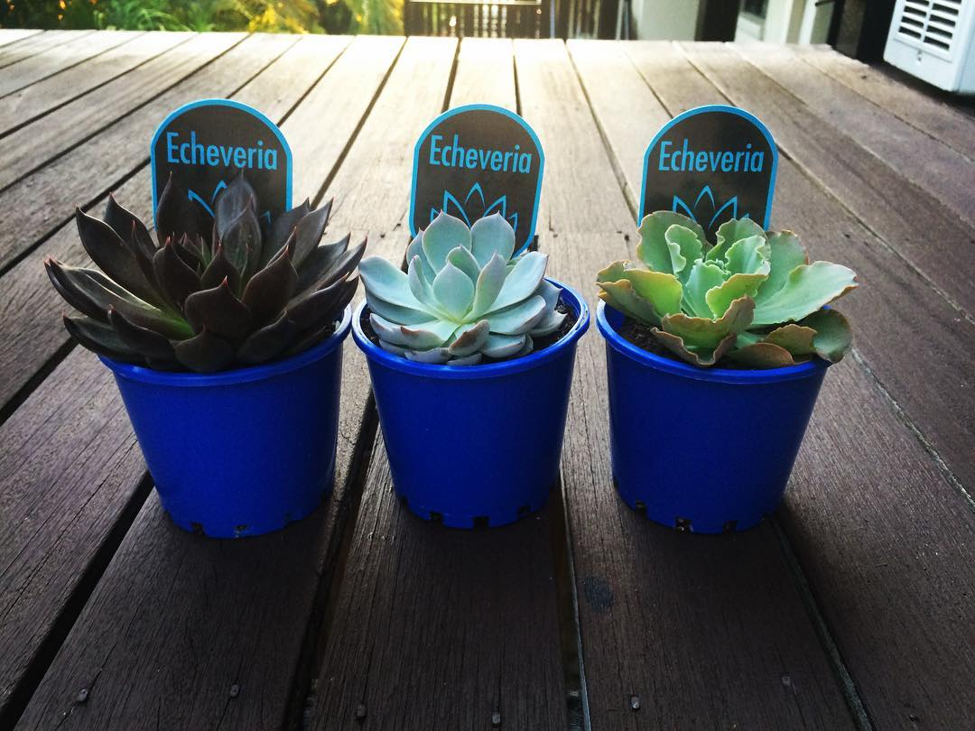 Superb Idea To Gift Succulent Plants For Nature Lover